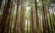 숲·룸·防, 호텔·리조트 '세이프케이션', 새해에도 진화한다