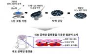 신약개발 동물실험 대체한다…줄기세포 '인공장기' 배양기술 개발