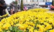 봄 봄 봄..수원시 봄맞이 꽃길 조성