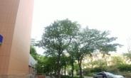 나무 한 그루도 소중하게… 마포구, 도로변 수목관리 지원