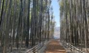 하동 섬진강변에 새로운 힐링 명소, 대나무 숲 산책로 탄생