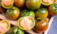 지금 놓치면 후회하는 제철 식품은?…짭짤이 토마토, OOO? [식탐]
