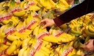 우윳빛깔 만들어주는 바나나 색상은?[식탐]