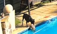 [영상]반려견의 '찐'우애…수영장에 친구 빠지자 34분 사투 끝 구조