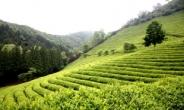 전국 녹차생산량 36% 전남 보성군 차(茶)박물관 경계 허물다