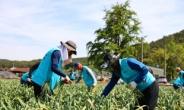 농식품부, 농번기 농촌 일손돕기 실시… 내달까지 3300여명 동참