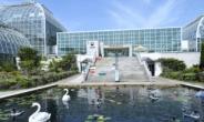 수련의 여왕 '빅토리아수련'의 자태 '뿜뿜' ···국립수목원, '열대수련 전시회' 개최