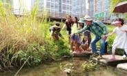 강동구, 고덕천 일대 하천생태체험 프로그램 운영