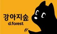 반려견 테마파크 강아지숲 밤 9시까지 야간개장