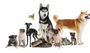전국 1201개 무인도에 '낚시·반려동물 동반 야영 허용' 추진