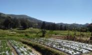 코이카, 동티모르에서 '농민참여형 지원 사업' 나서