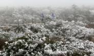 64년만의 때 이른 한파…12월 초순의 기온