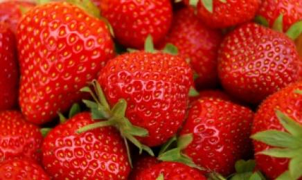 카페야 딸기 농장이야…겨울 딸기에 푹 빠진 카페 [언박싱]