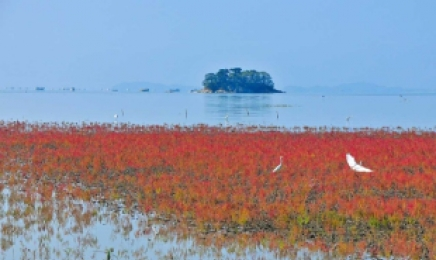 '순천 와온~벌교 장도' 순천만갯벌 유네스코 자연문화유산 올랐다