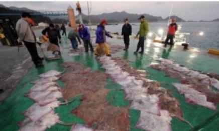 신안 흑산홍어잡이, 어업 국가중요어업유산 지정
