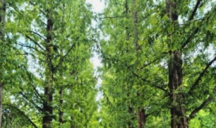 전남산림자원연구소, 탄소중립 연구 앞장