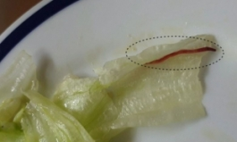 유명 체인점 햄버거 먹다 길이 5㎝ 붉은 벌레 나와 '기겁'