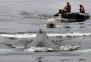 고래에 먹혔다 살아난 美남성, 비행기 추락에도 생존