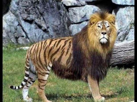 가장 희귀한 교배동물 7종류 영상