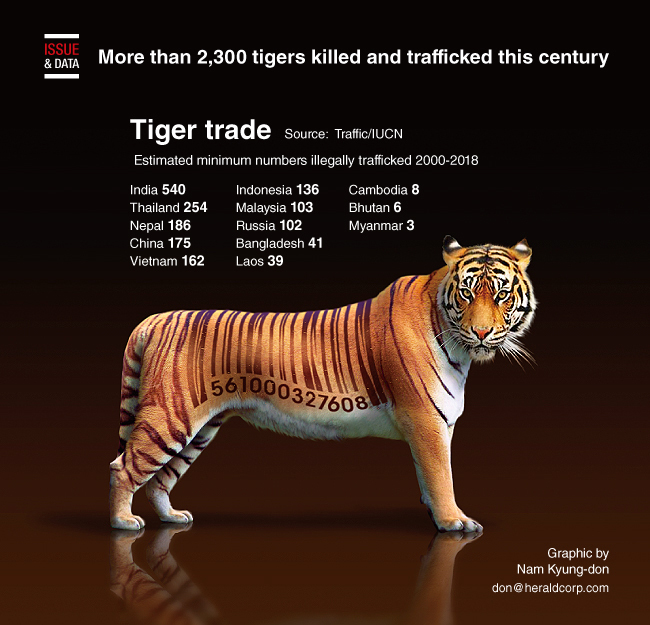 Graphic News] More than 2,300 tigers killed and trafficked