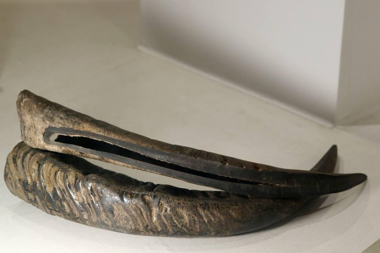 경기도 파주의 궁시 박물관에는 활을 만드는 데 사용되는 물소 뿔이 전시되어 있습니다. © 2020 현 원 강