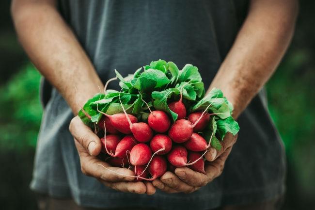 몇배 비싸도 유기농을 찾는 이유 '이것'.
