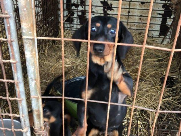 Video] Inside dog farm in Korea