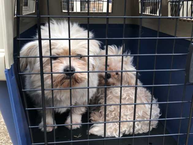 Video Inside Dog Farm In Korea The Korea Herald